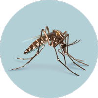 What you need to know about Zika Virus